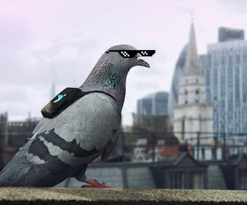 Pigeons reveal the Dirty Truth about the Air We Breathe