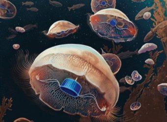 Ethique: les méduses bioniques ont-elles franchi une limite?