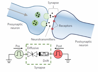 Artificial Synapses for Artificial Brains